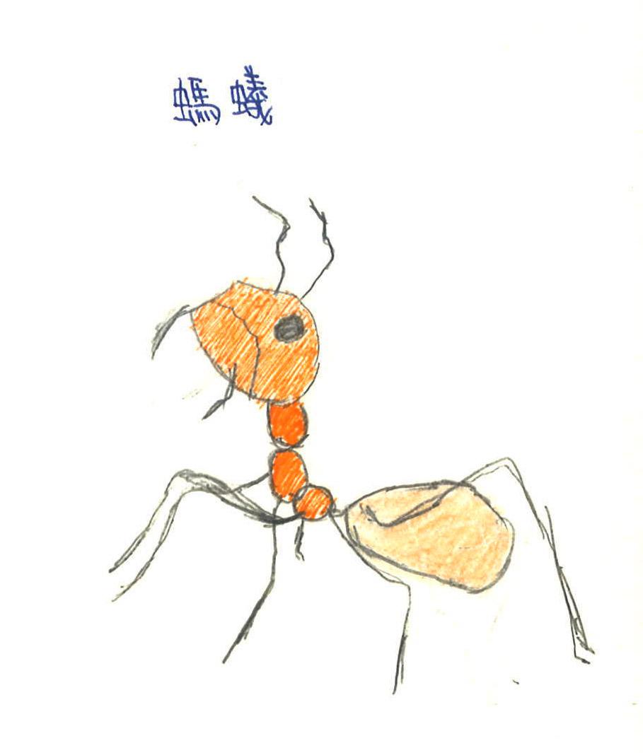 昆虫科技小制作 方法
